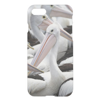 Hülse der Pelikane iPhone 8/7 Hülle