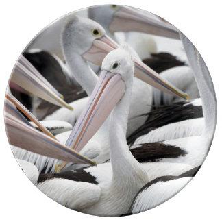 Hülse der Pelikane Porzellanteller