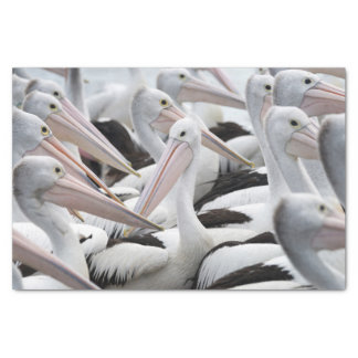 Hülse der Pelikane Seidenpapier