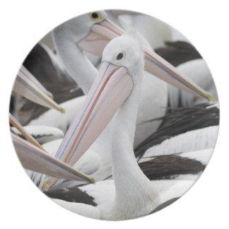 Hülse der Pelikane Teller