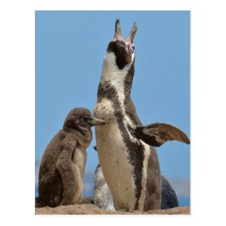 Humboldt-Pinguin-Elternteil und Küken Postkarte
