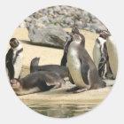 Humboldt-Pinguine Runder Aufkleber