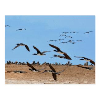 Humboldt-Pinguine und Fliegen-Vögel Postkarte