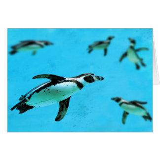 Humboldt-Pinguine unter Wasser Karte