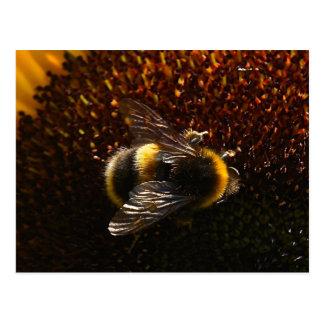 Hummel-Biene Postkarte
