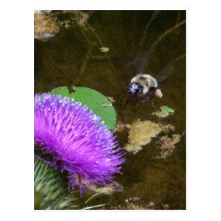 Hummel-Biene und Distel Postkarte