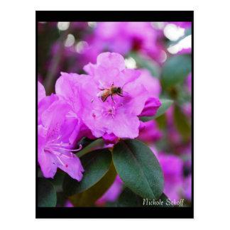 Hummel-Bienen-Postkarte Postkarte