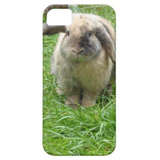 Hummel-Kaninchen iPhone 5 Schutzhülle