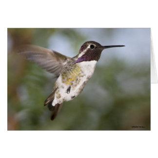 Hummingbird004 Karte