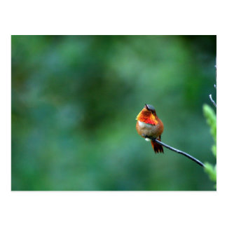 Hummingbird Postcard Postkarte