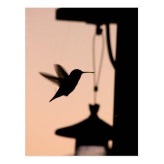 Hummingbird Postcard Postkarten