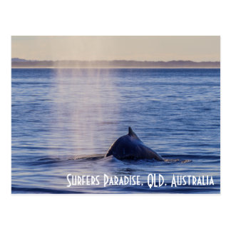 Humpack Wal-Surfer-Paradies Queensland Postkarte