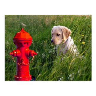 Hund auf dem Gebiet mit Hydranten Postkarte