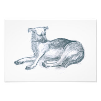 Hund. Bleistiftzeichnung Fotodruck