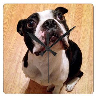 Hund Bostons Terrier Quadratische Wanduhr