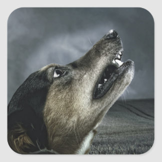 Hund, der am Sturm heult Quadratischer Aufkleber