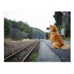 Hund, der auf Bahnstation sitzt Postkarte
