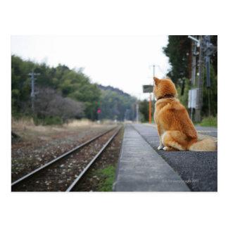 Hund, der auf Bahnstation sitzt Postkarten
