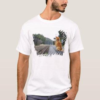 Hund, der auf Bahnstation sitzt T-Shirt
