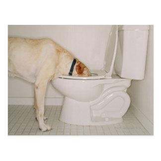 Hund, der aus Toilette heraus trinkt Postkarte