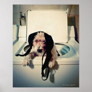 Hund, der heraus bei der Wäsche hilft Posterdruck