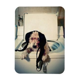 Hund, der heraus bei der Wäsche hilft Flexibler Magnet
