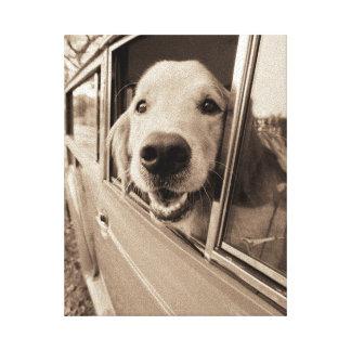 Hund, der heraus ein Auto-Fenster späht Leinwanddruck