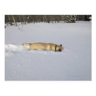 Hund, der im Schnee gräbt Postkarte