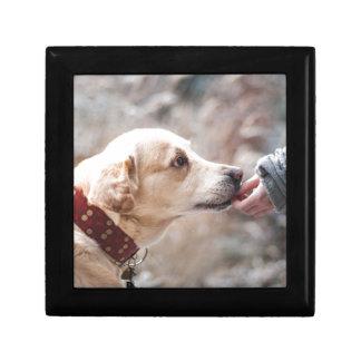 Hund Geschenkbox