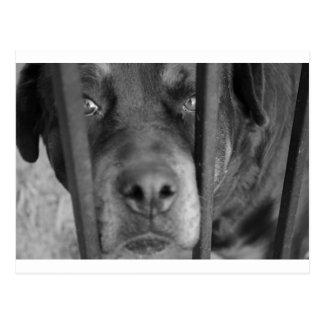Hund hinter Gittern Postkarte