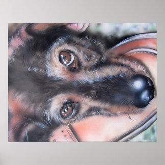 Hund Hundeplakat