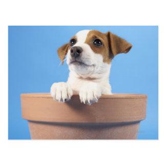 Hund im Flowerpot Postkarte
