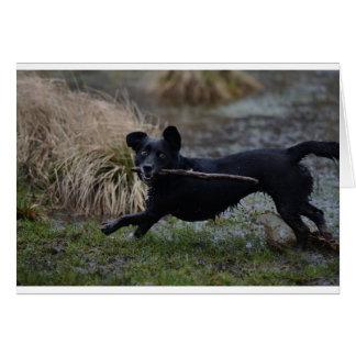 Hund im Schlamm Karte