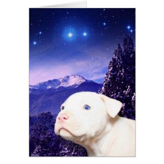 Hund ist der Gott, der rückwärts… buchstabiert wir Karte