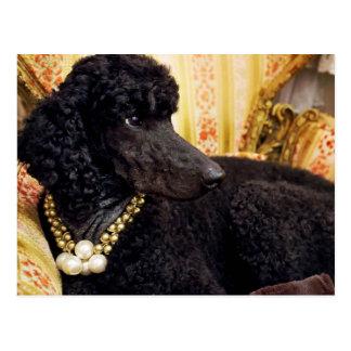 Hund mit einer Perlen-Halskette Postkarte