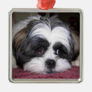 Hund Shih Tzu Quadratisches Silberfarbenes Ornament