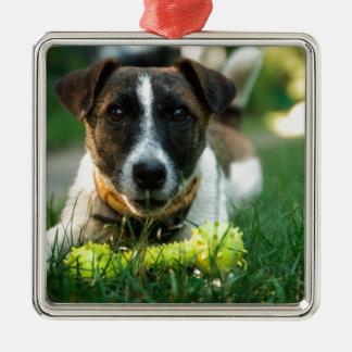 Hund und sein Spielzeug-Knochen Quadratisches Silberfarbenes Ornament