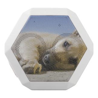 Hund Weiße Bluetooth Lautsprecher