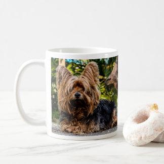 Hund Yorkshires Terrier Kaffeetasse