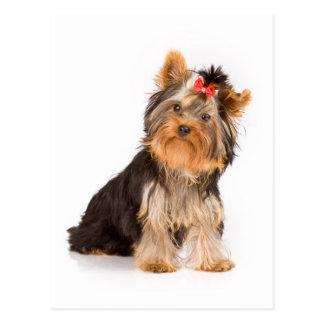 Hündchen-Raum-Postkarte Yorkshires Terrier