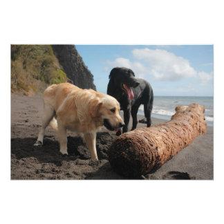 Hunde am Strand Kunst Foto