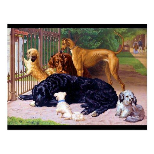 Hunde am Tor Postkarte