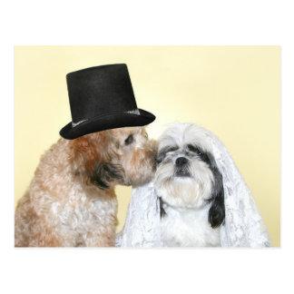 Hunde- Braut und Bräutigam Postkarte