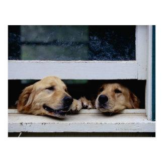 Hunde, die heraus ein Fenster schauen Postkarte