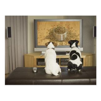 Hunde, die im Fernsehen Hundeteller mit Nahrung Postkarten