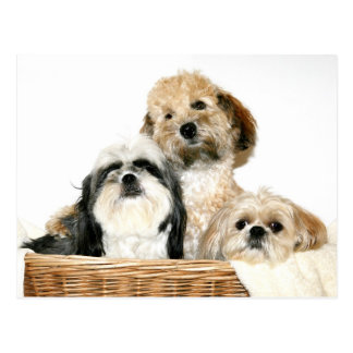 Hunde im Wäschekorb Postkarte