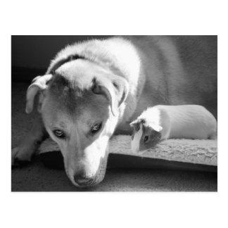 Hunde-und Meerschweinchen-Postkarte Postkarte