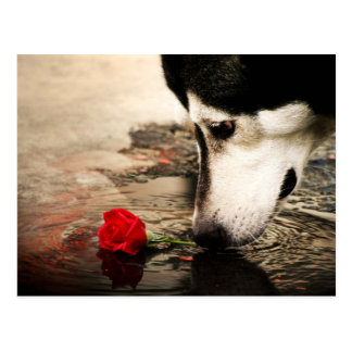 Hunde-und Rosen-Fotografie-Postkarte Postkarten