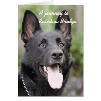HundeBeileid - Regenbogen-Brücke Karte