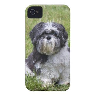 Hundedes niedlichen Foto-BlackBerry Shih Tzu mutig iPhone 4 Hüllen